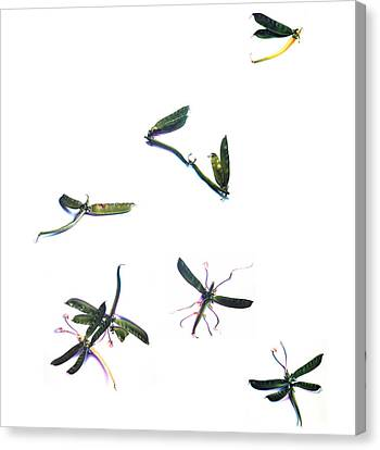 Canvas Print featuring the drawing Stir Fly by Donna Basile
