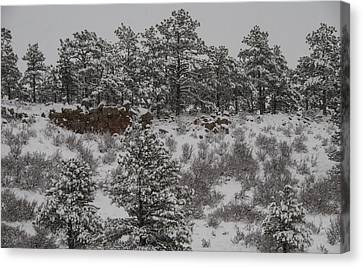Stockpiled Warmth Canvas Print by Harry Strharsky