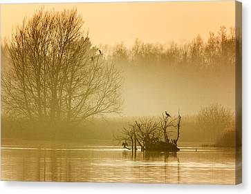 Stodmarsh Canvas Print by Ian Hufton