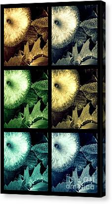 Stone Apples Canvas Print by France Laliberte