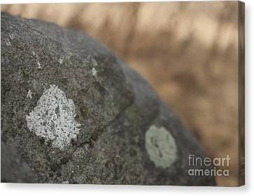 Stone Canvas Print by Graham Foulkes