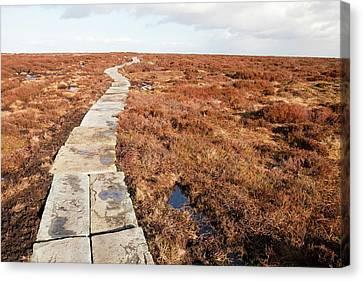 Stone Path Canvas Print - Stone Path Over Peatland by Ashley Cooper