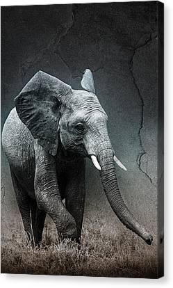 Stone Texture Elephant Canvas Print by Mike Gaudaur