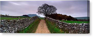 Stone Walls Along A Path, Yorkshire Canvas Print