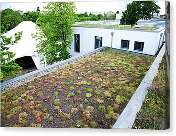 Stonecrop-planted Green Roof Canvas Print by Louise Murray