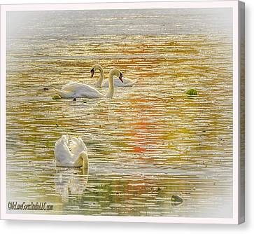 Waterfowl Canvas Print - Stoney Creek  Swans by LeeAnn McLaneGoetz McLaneGoetzStudioLLCcom