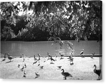 Canvas Print featuring the photograph Stony Brook Pond by Paul Cammarata
