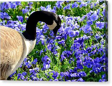 Stop And Smell The Flowers Canvas Print by Maria Urso