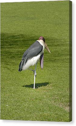 Canvas Print featuring the photograph Stork by Charles Beeler
