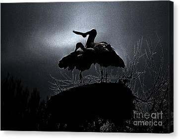 Stork Couple Canvas Print