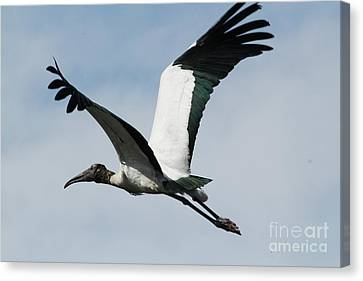 Stork In Flight Canvas Print by Theresa Willingham