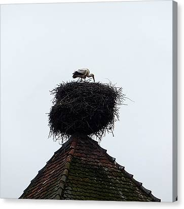 Stork Canvas Print by Marc Philippe Joly