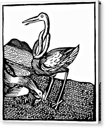 Stork Wood Engraving Canvas Print by