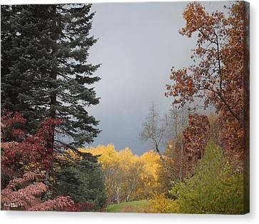 Storm In Hidden Gardens Canvas Print