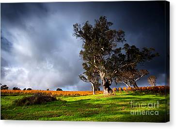 Canvas Print featuring the photograph Storm Onto A Vineyard by Boon Mee