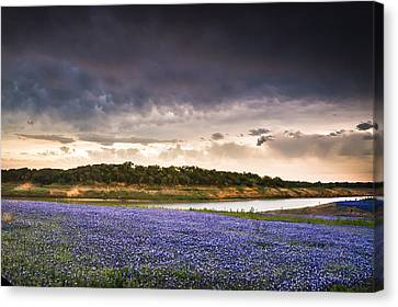 Storm Over Wildflower Field Canvas Print