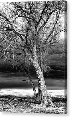 Canvas Print featuring the photograph Storm Tree by Steven Reed