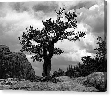 Storm Tree Canvas Print