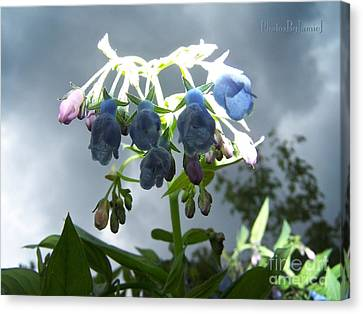 Stormy Bluebells Canvas Print
