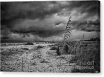 Stormy Seas Canvas Print by Anne Rodkin