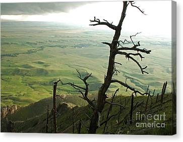 Canvas Print featuring the photograph Stormy Tree by Mary Carol Story