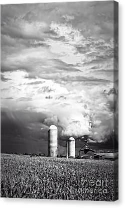 Cornfield Canvas Print - Stormy Weather On The Farm by Edward Fielding