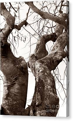 Story Tree Canvas Print by Jennifer Apffel