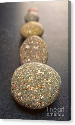 Straight Line Of Speckled Grey Pebbles On Dark Background Canvas Print by Colin and Linda McKie