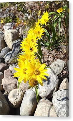 Strand Of Flowers Canvas Print