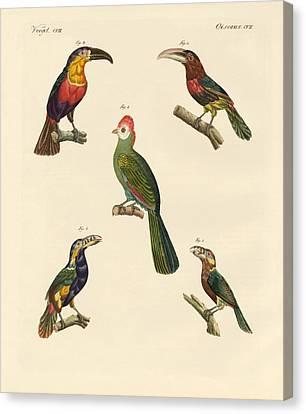 Strange Climbing Birds Canvas Print by Splendid Art Prints