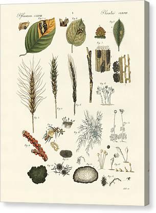 Strange Dusty And Thread Fungus Canvas Print