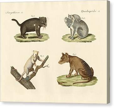 Koala Canvas Print - Strange Marsupials by Splendid Art Prints