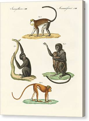 Strange Monkeys Canvas Print