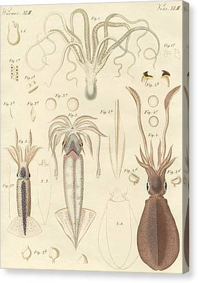 Tentacles Canvas Print - Strange Soft Worms by German School