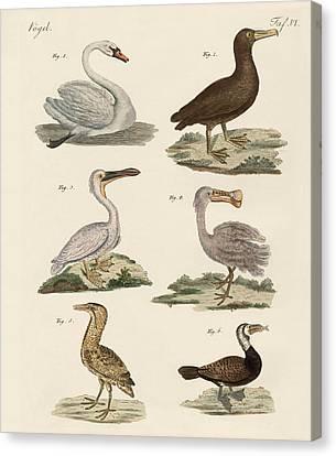 Strange Water Birds Canvas Print by Splendid Art Prints