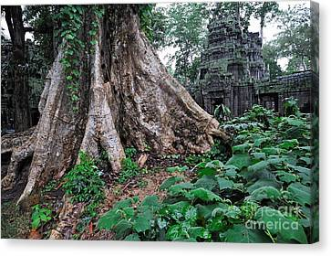 Strangler Fig Tree Roots On The Ancient Preah Khan Temple Canvas Print by Sami Sarkis