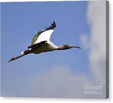Stratostork Canvas Print by Al Powell Photography USA