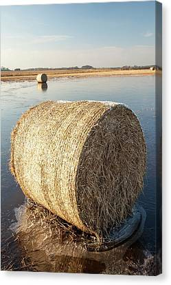 Straw Bales On A Flooded Field Canvas Print by Ashley Cooper