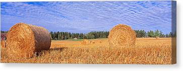 Straw Rolls, Sweden Canvas Print by Panoramic Images