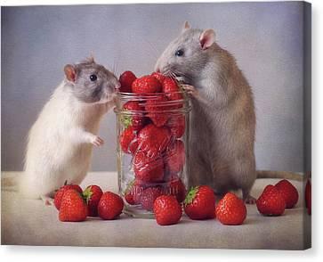 Rodent Canvas Print - Strawberries by Ellen Van Deelen