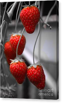 Sweet Touch Canvas Print - Strawberries by Michelle Meenawong
