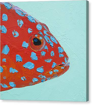 Strawberry Grouper Fish Canvas Print by Jan Matson