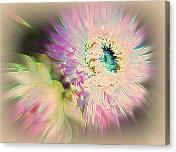 Strawflower Awakening Canvas Print by Shirley Sirois