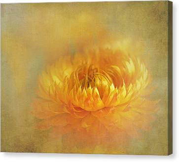 Strawflower IIi With Textures Canvas Print by David and Carol Kelly