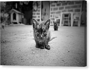 Canvas Print featuring the photograph Stray Cat #1 by Antonio Jorge Nunes