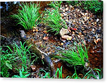 Canvas Print featuring the photograph Stream By The Trail by Ludwig Keck