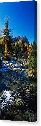Stream Flowing In A Forest, Mount Canvas Print by Panoramic Images