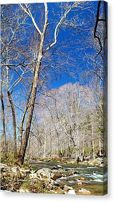 Canvas Print featuring the photograph Stream In Spring Montgomery County Pennsylvania by A Gurmankin