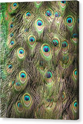 Canvas Print featuring the photograph Stream Of Eyes by Diane Alexander