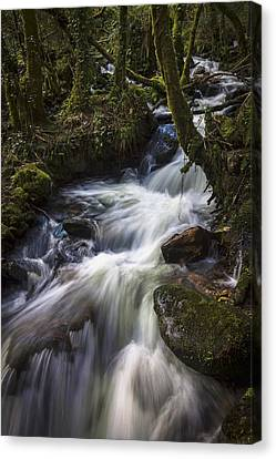Canvas Print featuring the photograph Stream On Eume River Galicia Spain by Pablo Avanzini